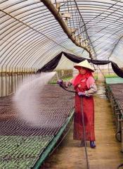 蔬菜產銷班的溫室