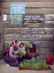 六成的居民從事農業工作