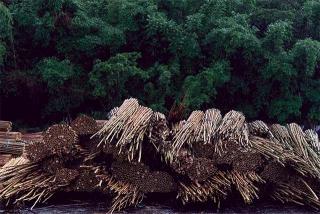 元立集貨場堆放的竹料