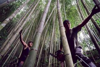 竹林地疏伐