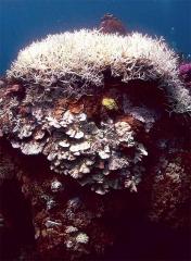 珊瑚礁白化