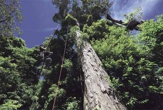 繩索攀高上樹