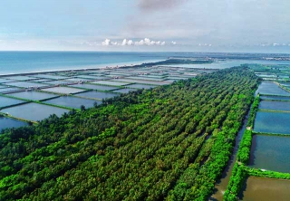 嘉義1920國有林班地上的防風林