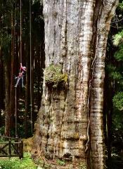 台灣第一位ISA認證攀樹師