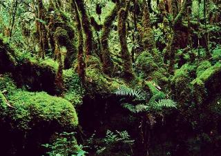 苔蘚、蕨類植物