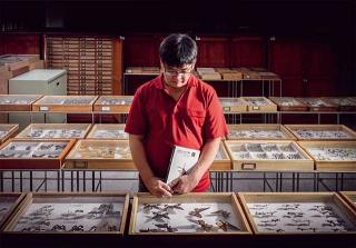 農業試驗所昆蟲標本館