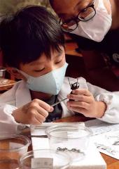 昆蟲標本拆解實驗