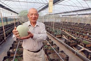 頂級洋香瓜