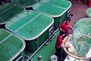台灣櫻花鉤吻鮭生態中心