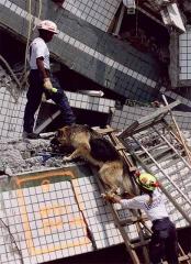 搜救犬進入災區