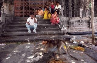印度人崇拜猴