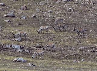 放牧與野生動物天堂