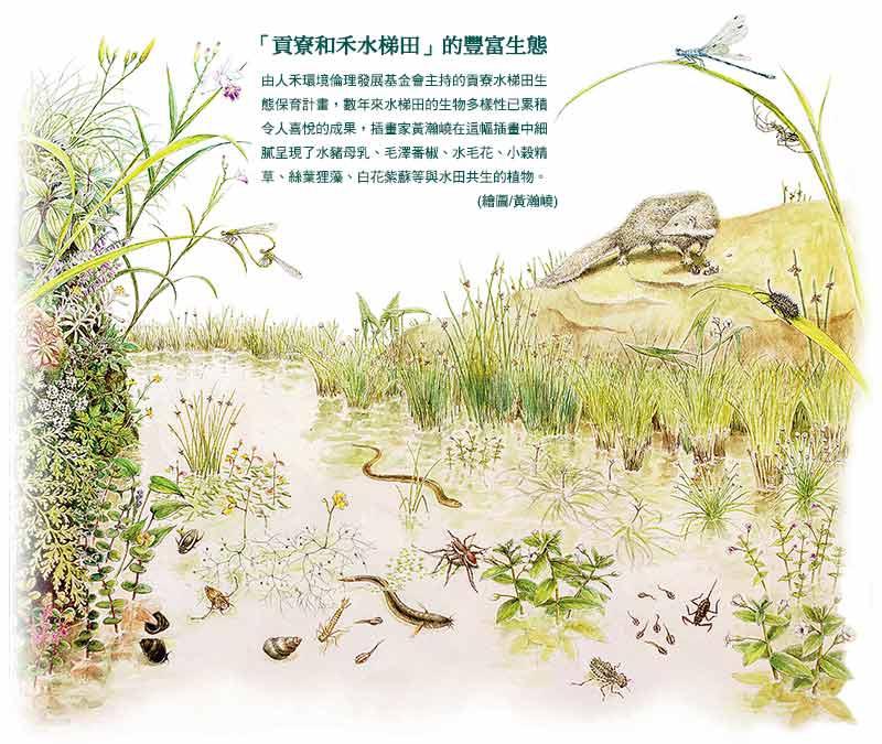 「貢寮和禾水梯田」的豐富生態