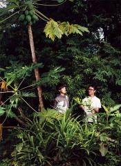 南洋香料植物