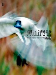 【探索系列】黑面琵鷺全紀錄