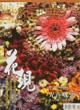 vol.077 >2004.12 台灣雲南‧荷蘭花產業