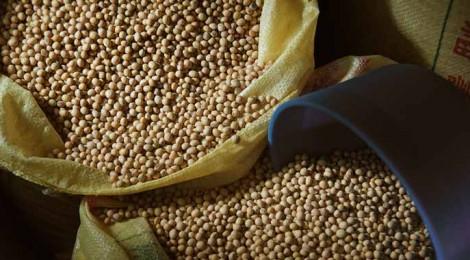 【台灣綠食堂】黃豆 不願面對的真相