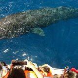 whale_720