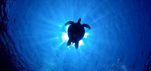 turtle.00_720