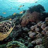 turtle.01_720